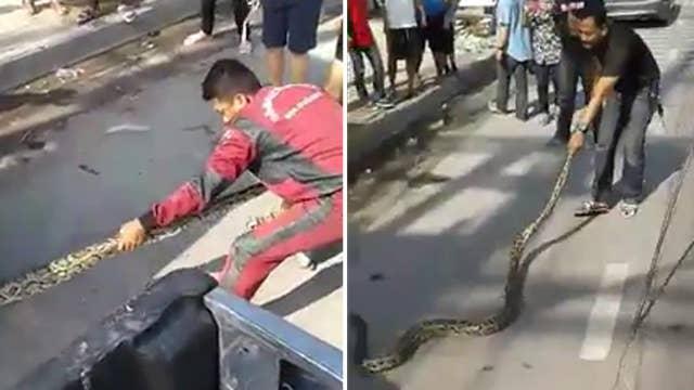 Gigantic python yanked from car engine tug-of-war-style