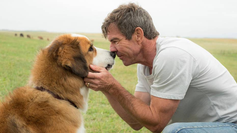PETA attacks, Dennis Quaid defends 'A Dog's Purpose'