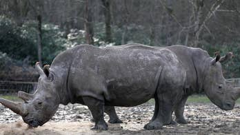 Officials say it may be the first time an animal in captivity in Europe has been killed by poachers