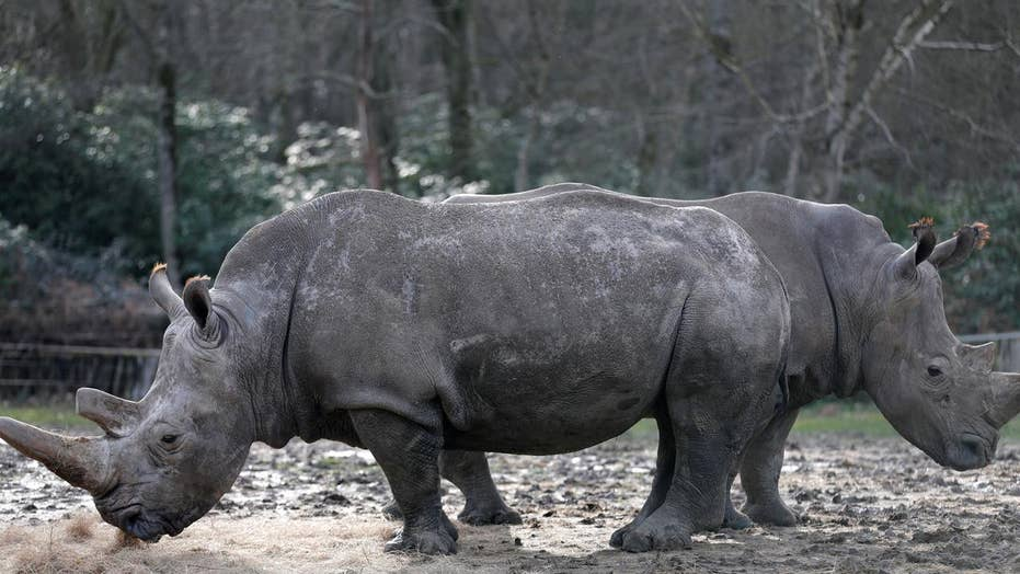 Poachers kill rhinoceros in wildlife park near Paris
