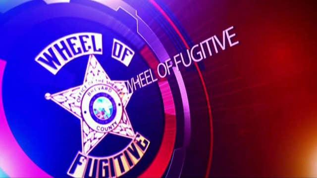 Fox Flash: Wheel of fugitive