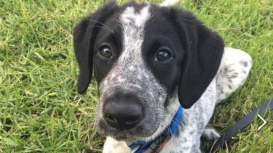 Young pup at Auckland Airport in New Zealand shot after it escaped its handler and ran loose for more than three hours disrupting many flights