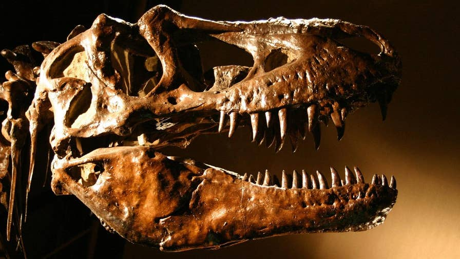 Scientists believe Theropod dinosaurs, which include the Tyrannosaurus Rex, are grouped in the wrong family tree