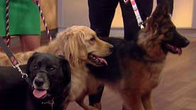 Man's best friend being trained to save your life; Dr. Liz Bales explains on 'Fox & Friends'