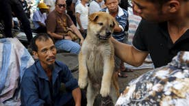 Taiwan passes landmark amendment, banning sale and consumption of dog and cat meat