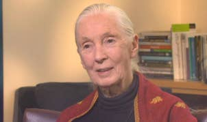 Dr. Jane Goodall on why she had no hesitation going to Africa to study chimpanzees