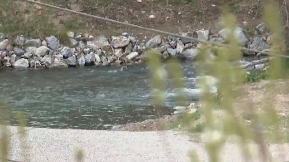 Woman drowns trying to rescue her dogs
