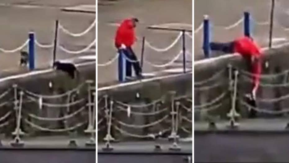 Hero rushes to rescue feline knocked into river in cat fight
