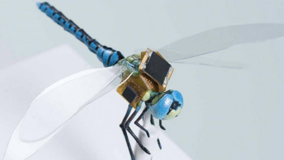 Cyborg dragonflies could spy for the U.S.