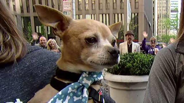 'Fox & Friends' celebrate National Pet Month