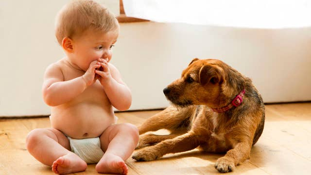 Getting your pets ready for a baby's arrival