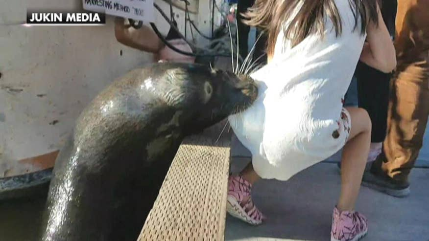 Watch as a young girl sitting on a dock near Vancouver was dragged into the water by a wild sea lion