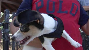Florida vets are warning dog owners about the dangers of dog flu - or canine influenza - as a handful of pups come down with the illness
