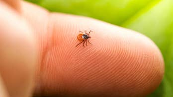 Massachusetts resident contracts rare tick-borne illness that can cause brain infection, death