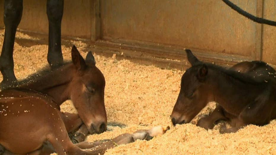 Daily double: Horse gives birth to twins in California
