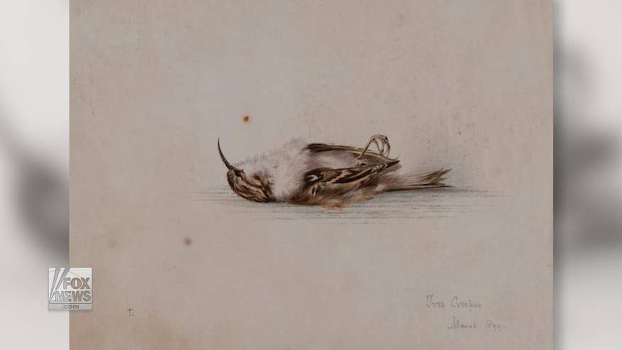 A 118-year-old painting by British explorer Dr. Edward Wilson has been discovered by scientists in Antarctica. It is a mystery how the watercolor of a bird arrived at a hut in Cape Adare
