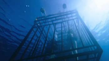 Mandy Moore and Claire Holt find themselves trapped underwater, fighting for their lives in new thriller
