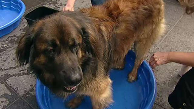 After the Show Show: Summer tips for dog lovers