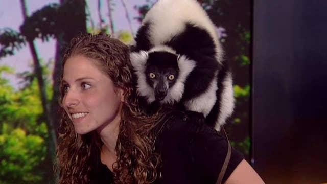 Crazy critters visit the 'Fox & Friends' set