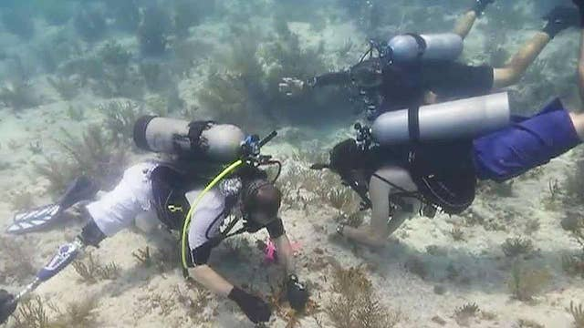 Wounded warriors helping rebuild Florida's coral reefs