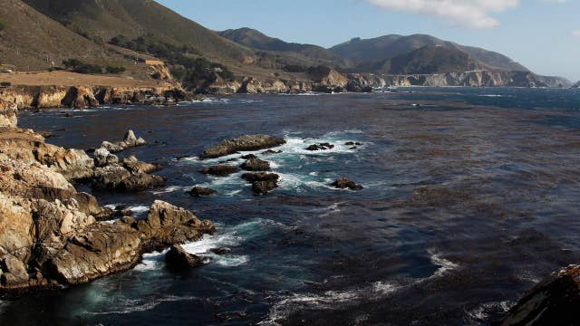Pacific coast kelp forests are in crisis