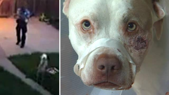 Police officer responding to home alarm shoots service dogs