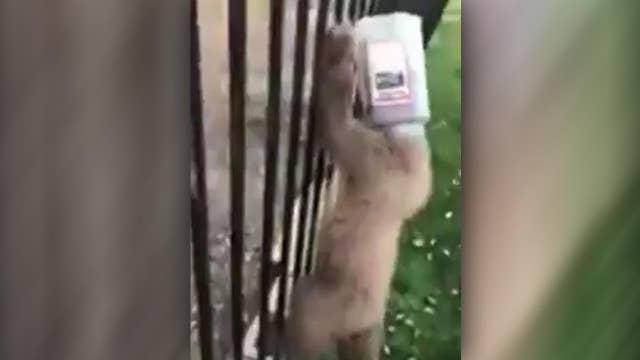 Cops save bear cub with head stuck in plastic jug