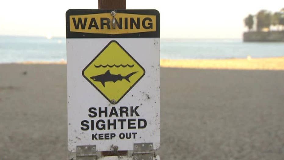Shark attack partially shuts down popular Calif. beach