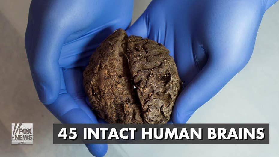 Forty five intact human brains found in Spain