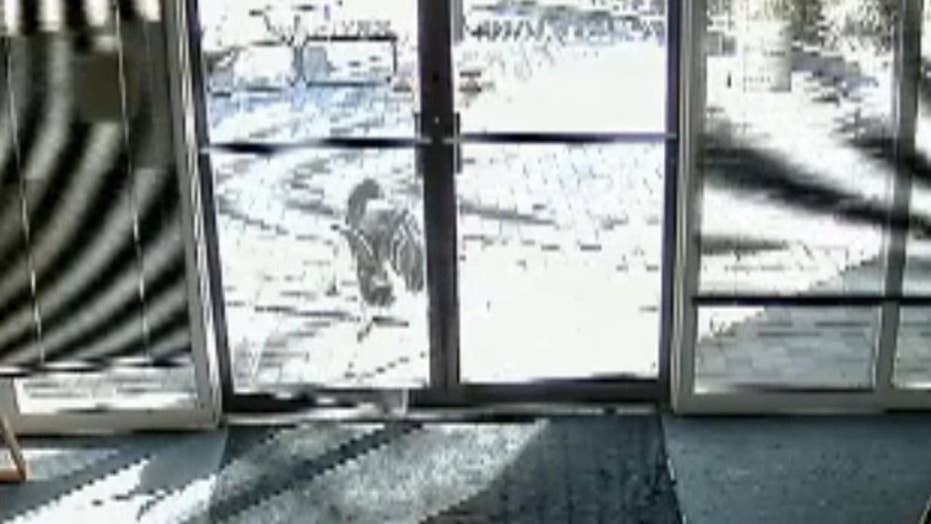 Security camera captures goats breaking into office building