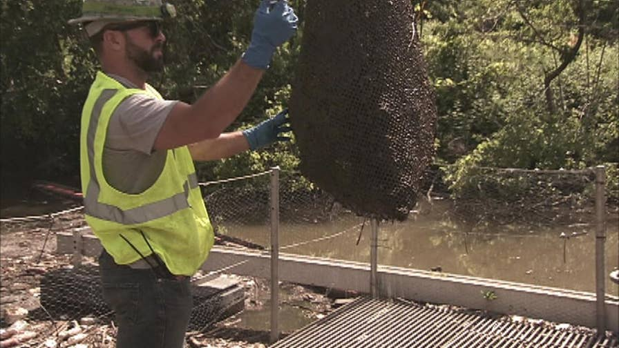 The Northeast Ohio Regional Sewer District collects between 25 and 80 tons of 'nasty' material from waterways each year, in an attempt to decrease the sewage reaching Lake Erie