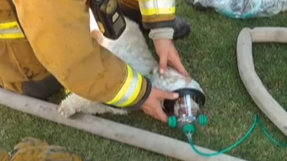 Firefighters revive unconscious dog saved from house fire
