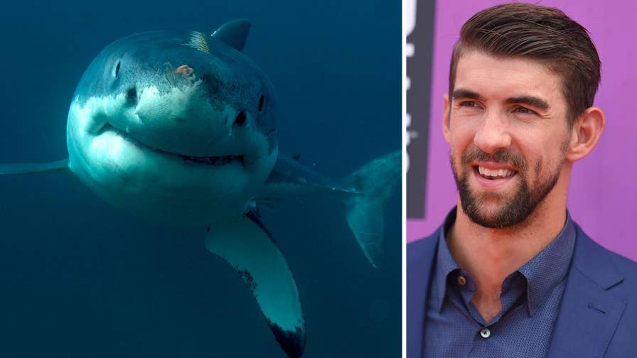 Michael Phelps loses to computer-generated shark