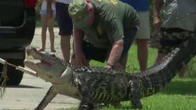 Florida man attacked by gator
