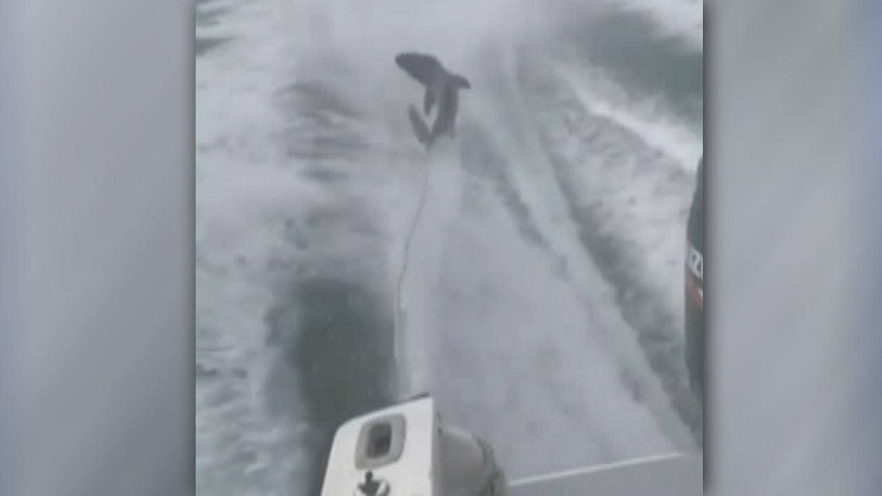 3 Florida men charged in shark-dragging video