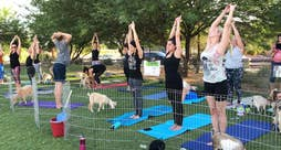 Yoga enthusiasts hope to find inner peace and take a selfie with the furry animals