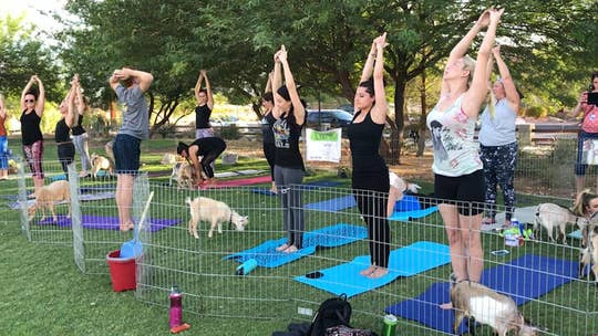 Goat Yoga combines the foundations of yoga with the cuteness of goats