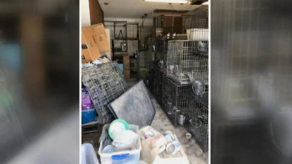 Over 100 animals rescued from inhumane living conditions