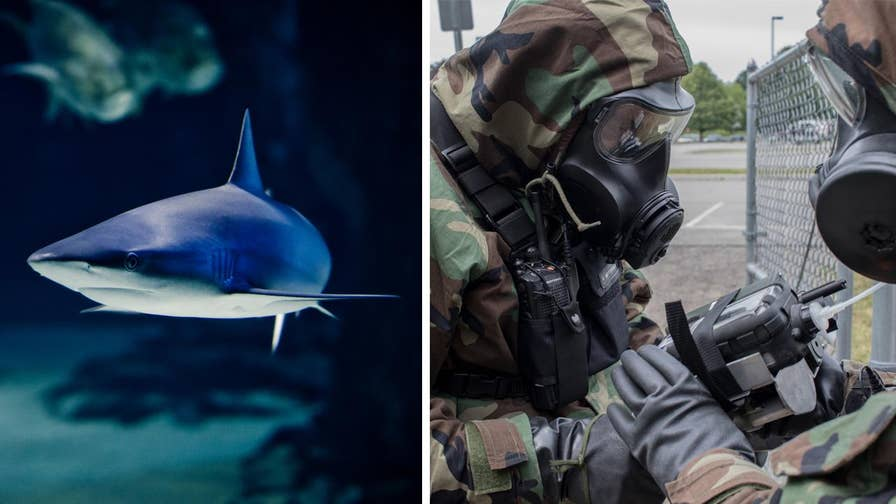 The U.S. military is investigating whether a protein in shark blood can help hunt for chemical and biological weapons and reveal them before they harm military personnel