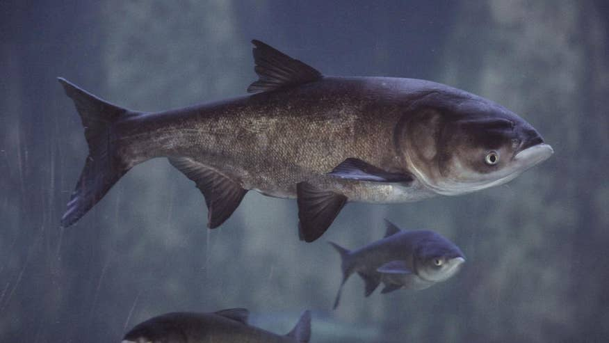 Michigan governor Rick Snyder introduces the 'Invasive Carp Challenge' to encourage solutions to stop infestation of Asian carp from killing native species in the Great Lakes