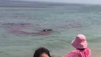 Shark feasts on seal in video, causes panic on Cape Cod beach