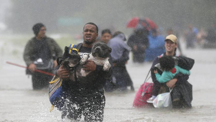 Hurricane Harvey tore through Texas abandoning thousands of animals. Nationwide rescues and shelters rally to help.