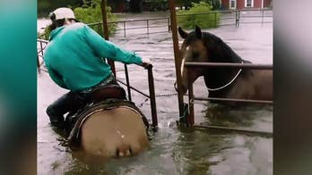 Young man rescues horse trapped in Texas floodwaters after Tropical Storm Harvey
