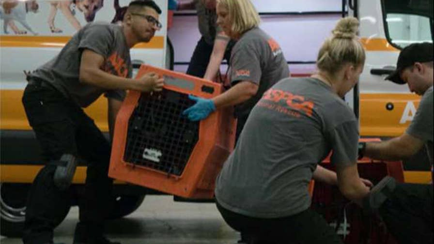 Relocated 300 'un-owned' shelter animals from areas at-risk from Irma in Florida