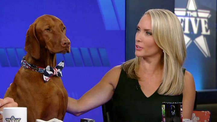 Jasper helps Dana deliver her corny jokes of the day