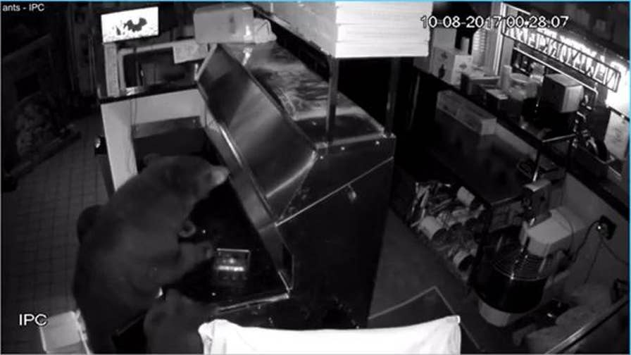 A mother bear and her two cubs broke into Antonio's Real New York Pizza in Estes Park, Colorado.  Surveillance videos show the bears ripping out the drive-thru window and ransacking the restaurant kitchen to help themselves to pizza dough and salami.