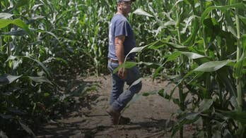 Corn mazes are more than just frustrating dead ends, winding trails, and challenging terrain. Fox News learns how a corn maze helped save Anthony Lentini's farming business.