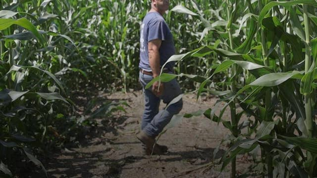 How corn mazes saved one family's farming business