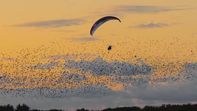 Paraglider fulfills dream of flying with birds