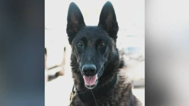 Emotional final farewell for Illinois K-9 officer
